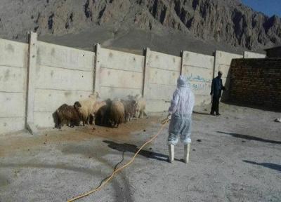 900هزار رأس دام سبک در استان سمنان سم پاشی شدند
