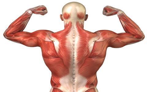 برای کاهش دادن درد عضلات چکار کنیم؟